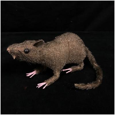Furry Rat