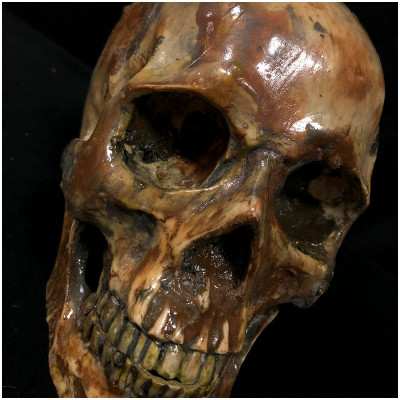 Deluxe Resin Skull